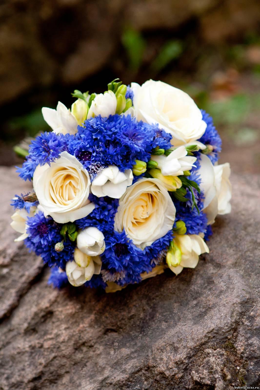 Васильки цветы фото букеты